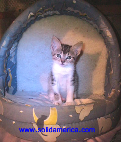 cathouse catbed