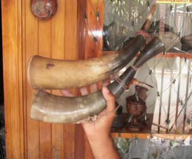 cow horns - cachos de toro, los cuernos