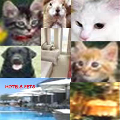 pets acceptance