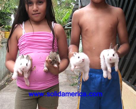 cute bunniy baby rabbit | conejo bebe