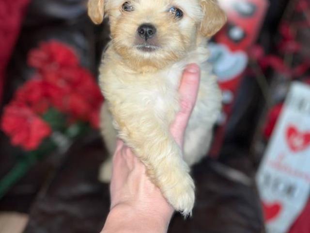 Titanium Rings Pendant Necklace