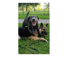 The Best Dog Training Free Interview