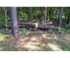 Give Away A Fallen Tree For Wood Free Stuff
