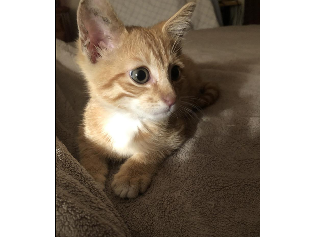 Cute Kitten Asking For A New Owner