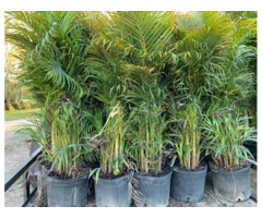 Palms Garden & Outdoor Landscaping Material