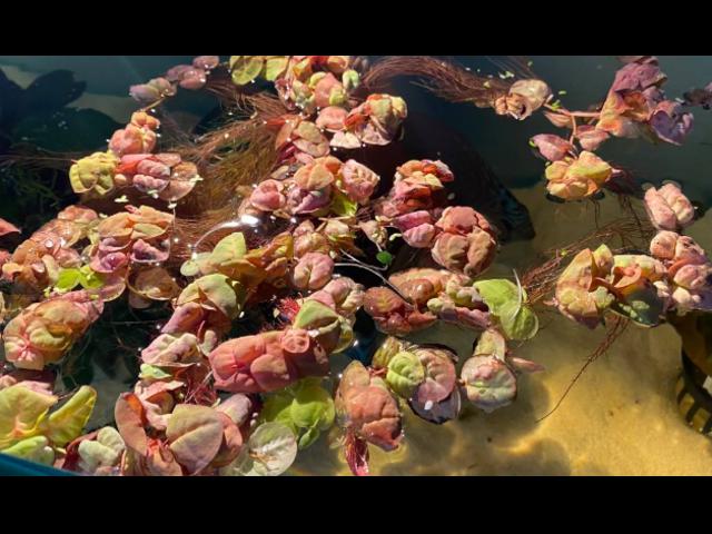 Aquarium Plants Are On Sale Now