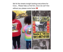 Missing Dog Pet